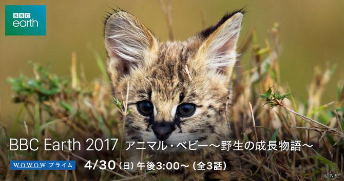 BBC Earth 2017 アニマル・ベビー〜野生の成長物語〜