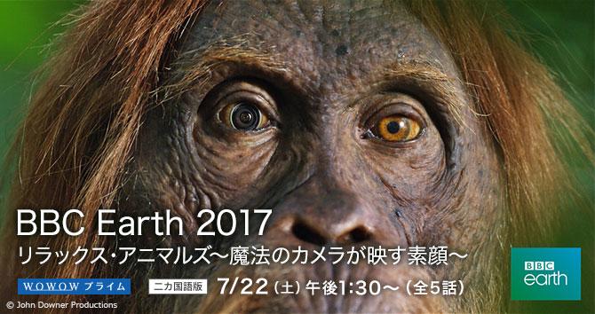 BBC Earth 2017 リラックス・アニマルズ 〜魔法のカメラが映す素顔〜