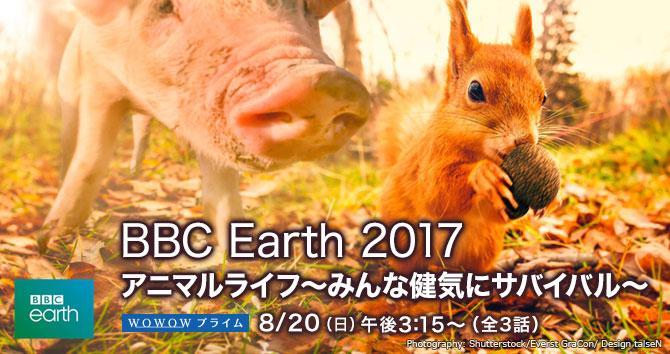 ドキュメンタリー BBC Earth 2017 アニマルライフ 〜みんな健気にサバイバル〜