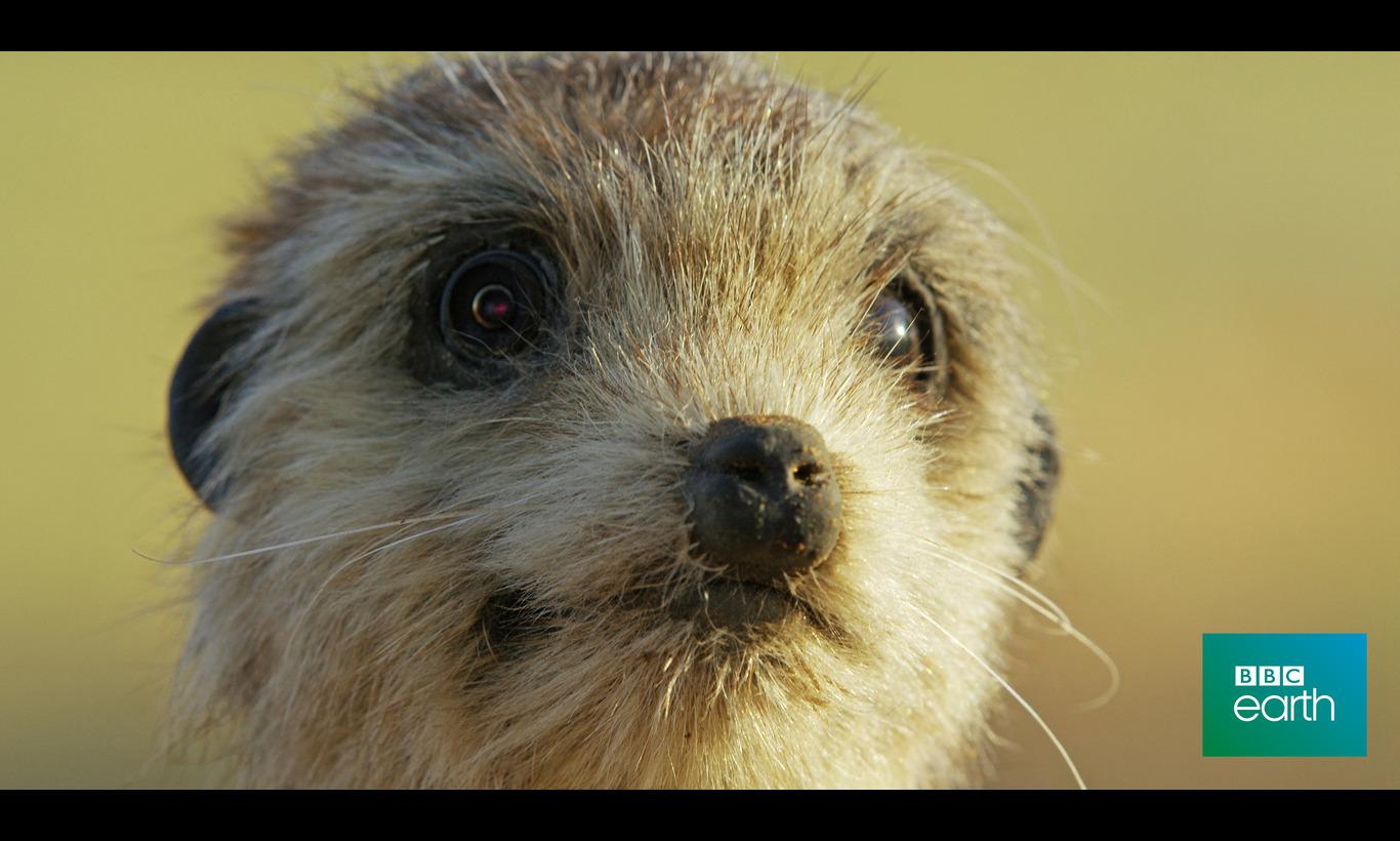 BBC Earth リラックス・アニマルズ~魔法のカメラが映す素顔~