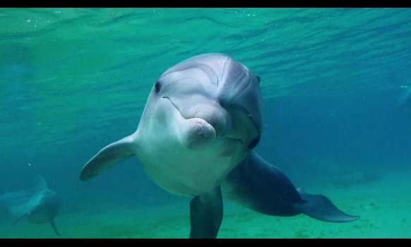 ノンフィクションW ドルフィン・マン~ジャック・マイヨール、蒼く深い海へ/特別映像