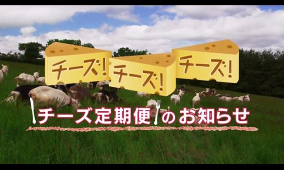 ★チーズ定期便のお知らせ★