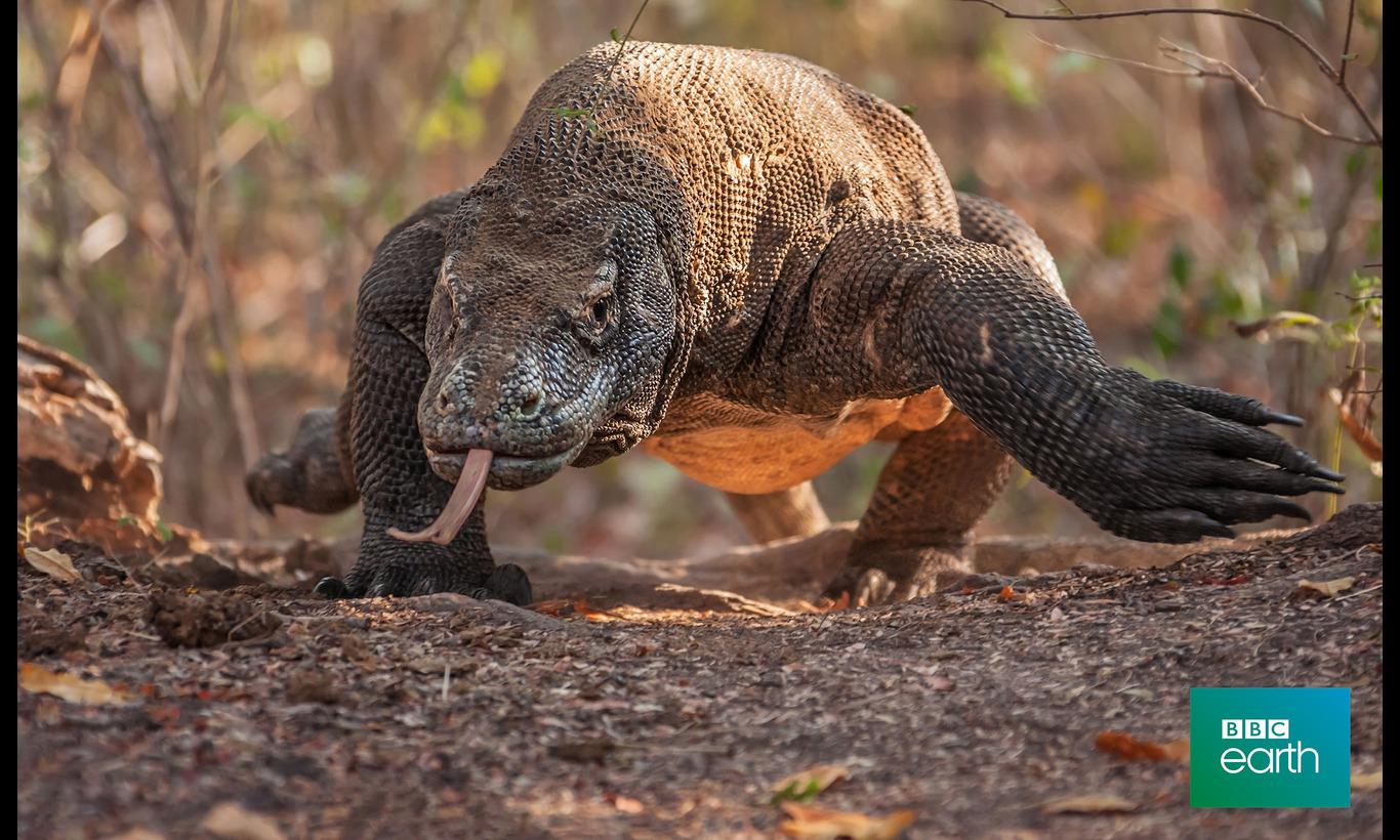 BBC Earth 2019 ナチュラルワールド 特集:驚異の動物大集合!