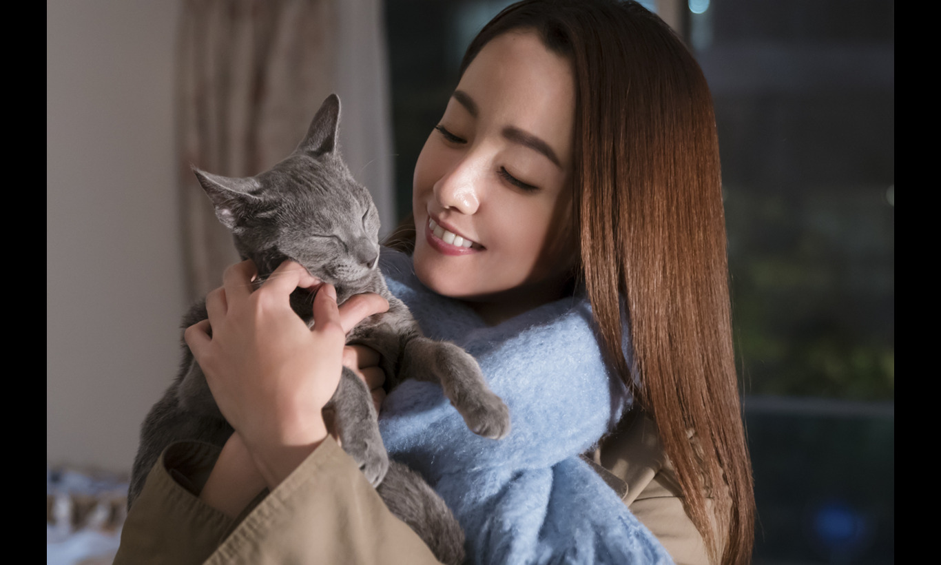 猫は抱くもの
