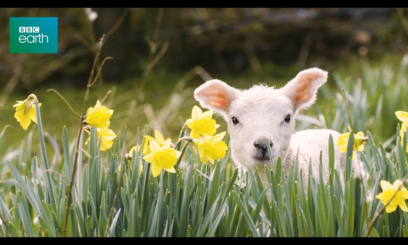 BBC Earth 2020 牧場の動物たちの秘密