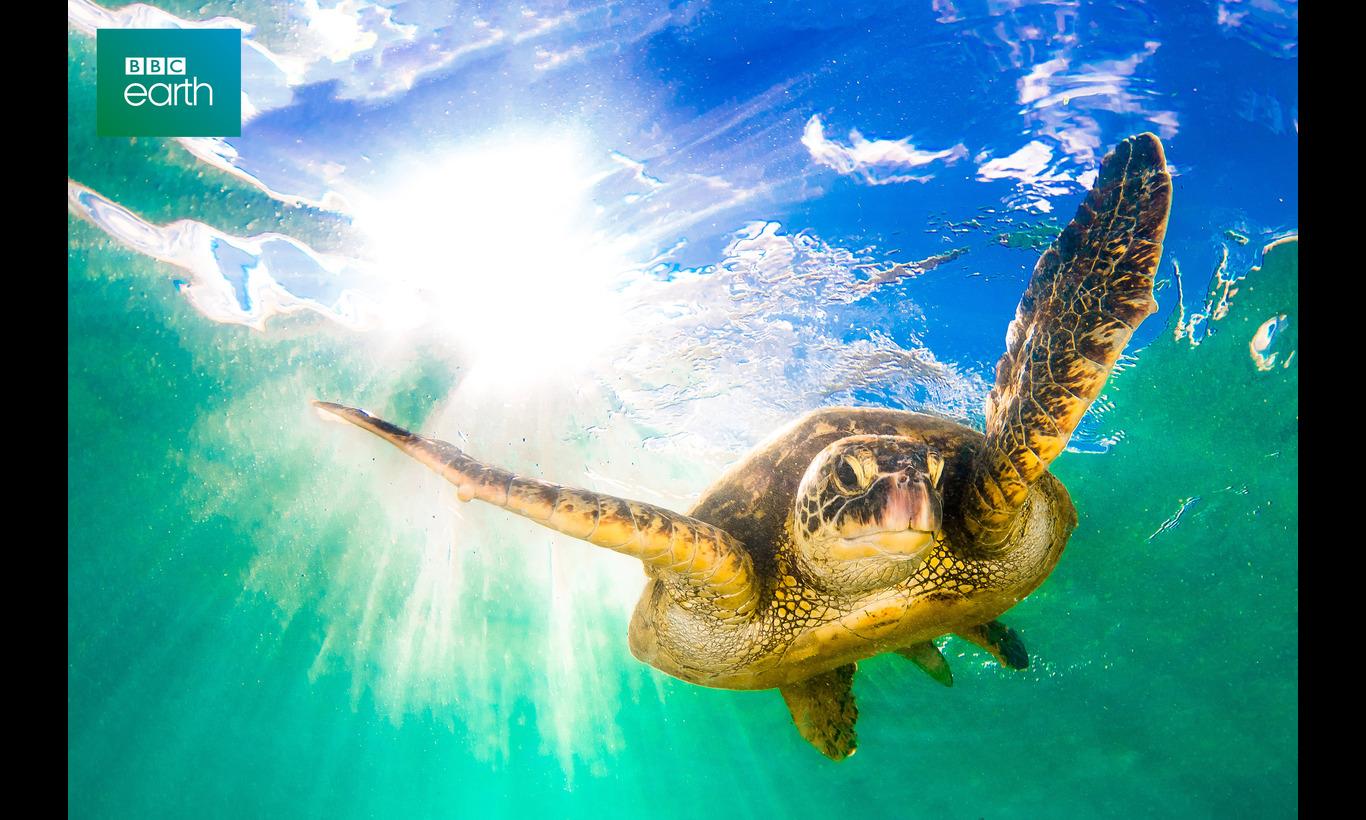 BBC Earth 2020 トロピカル・アイランド 常夏の楽園