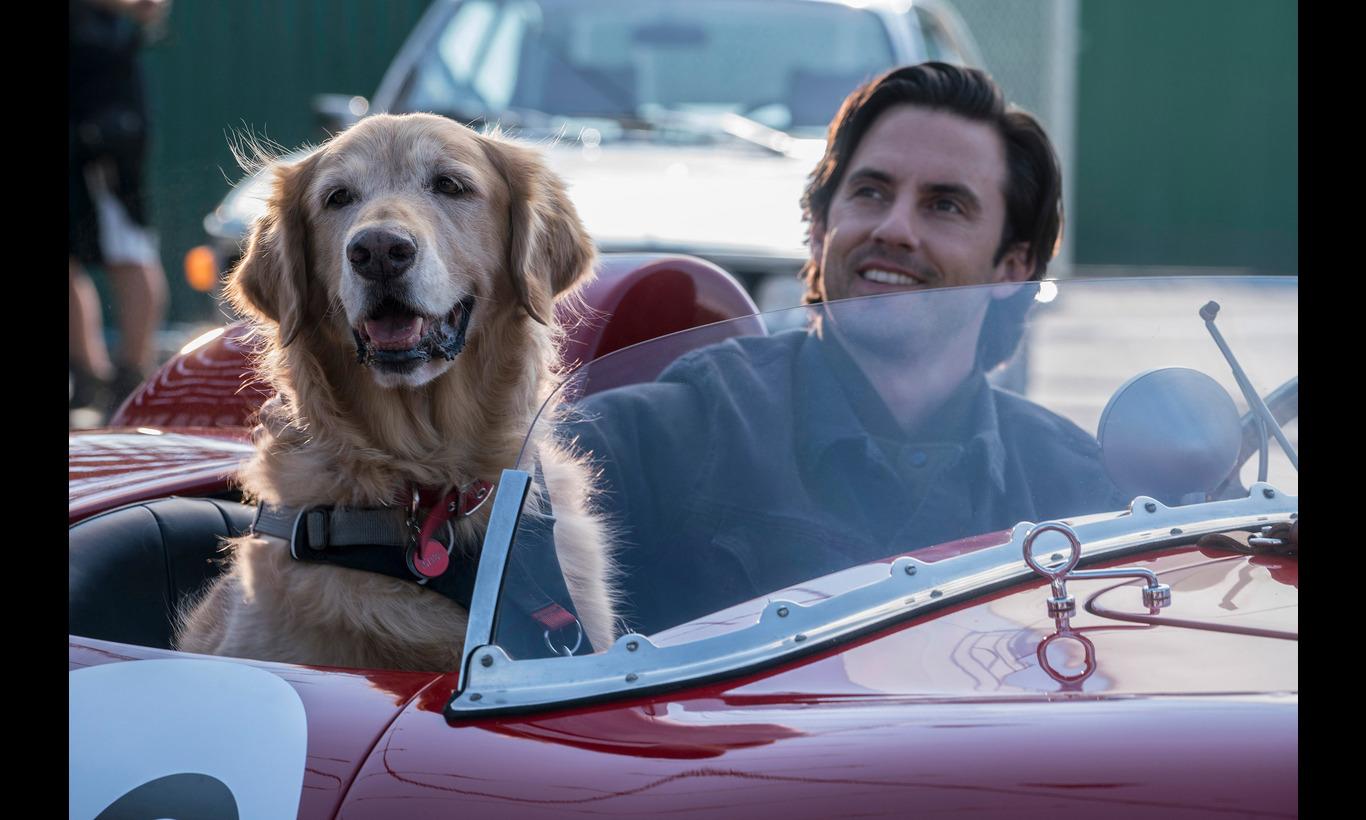 エンツォ レーサーになりたかった犬とある家族の物語