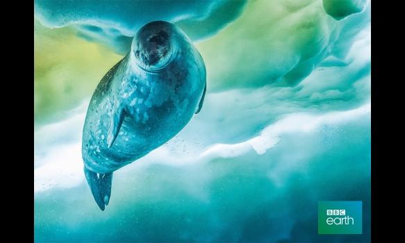 BBC Earth 2020 セブン・ワールド ただひとつの地球 #1 南極