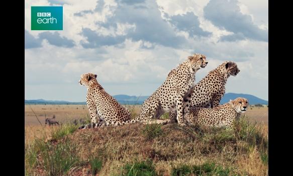 BBC Earth セブン・ワールド ただひとつの地球 #7 アフリカ
