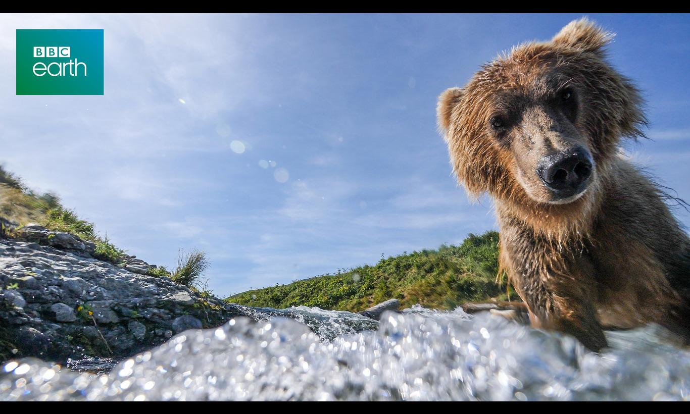 BBC Earth 2021 リラックス・アニマルズ2~魔法のカメラが映す素顔~