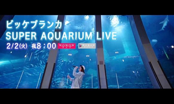 ビッケブランカ/プロモーション映像