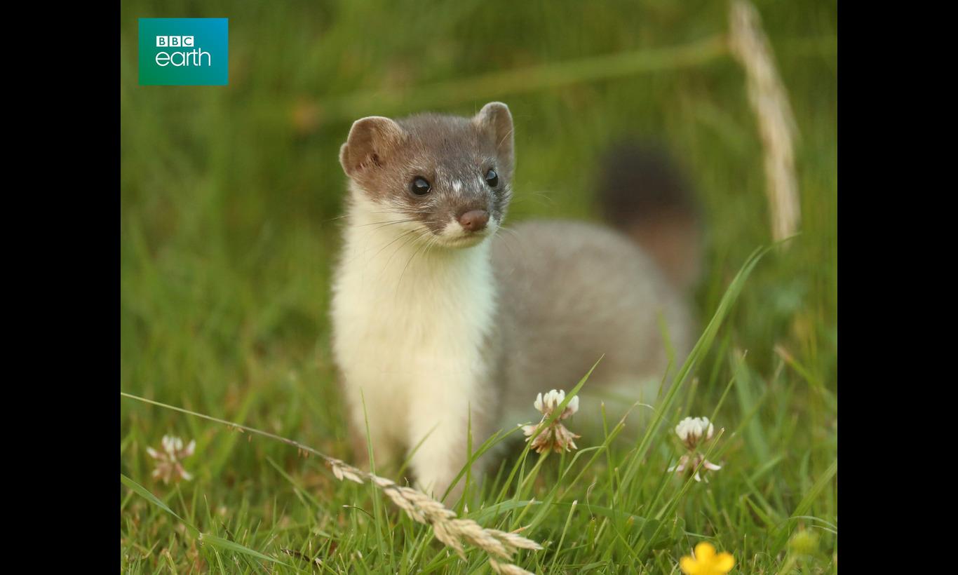 BBC Earth 2021 ナチュラルワールド 特集:動物界のアウトロー