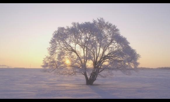 4K HEALING 北海道~冬の煌めき~