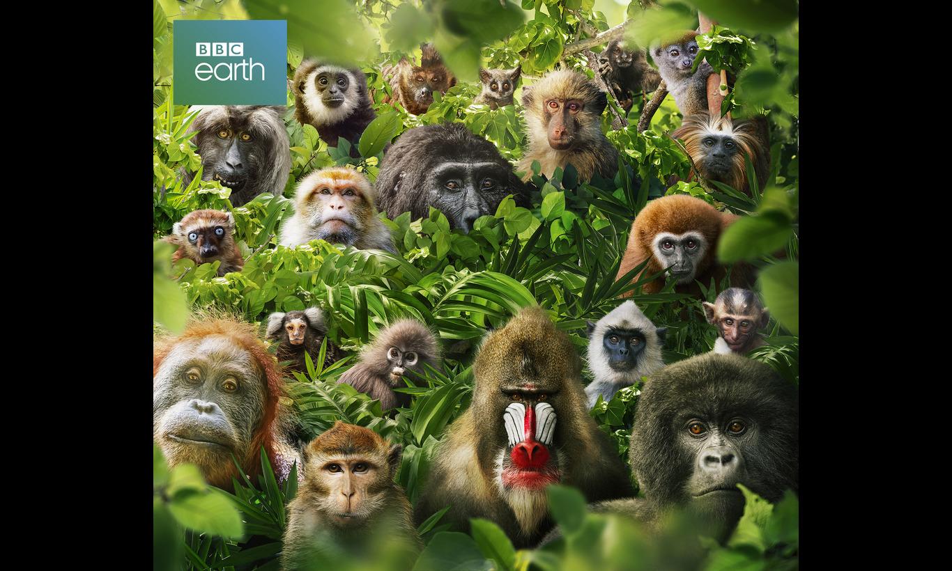 BBC Earth 2021 霊長類(プリマーテス) ボクらの遠い親戚
