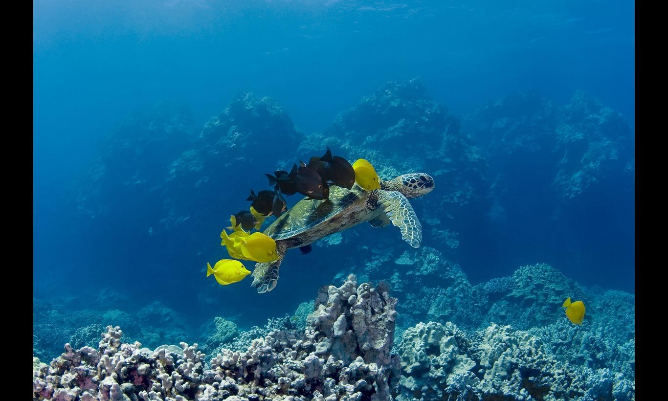 BBC EARTH サウス・パシフィック 海と島々の饗宴