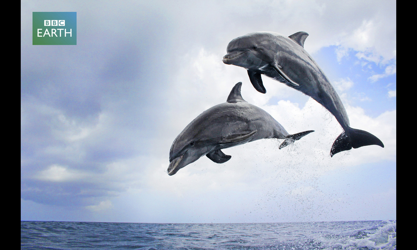 BBC EARTH スパイカムシリーズ 海の友だちイルカの素顔