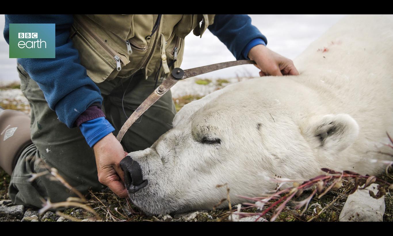 BBC Earth サバイバルストーリー~大自然を生きる~