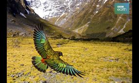 BBC Earth ワイルド・ニュージーランド〜美しき野生の楽園〜
